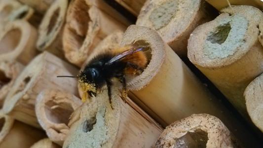 construire-nichoir-abeille-solitaire